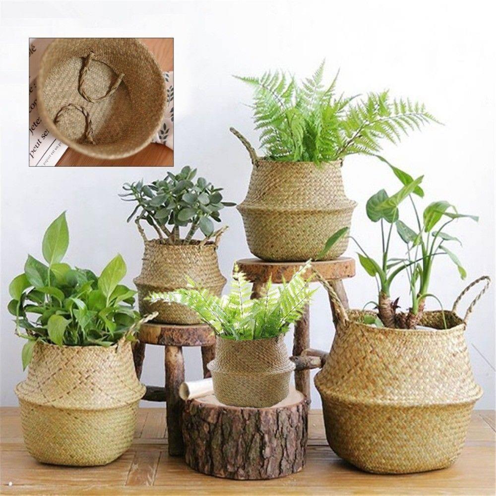 fleurs et plantes pas cher - Agencement de jardin aux meilleurs prix