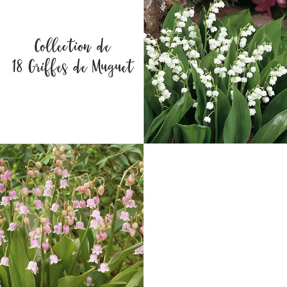 ou trouver du muguet a planter - Agencement de jardin aux meilleurs prix