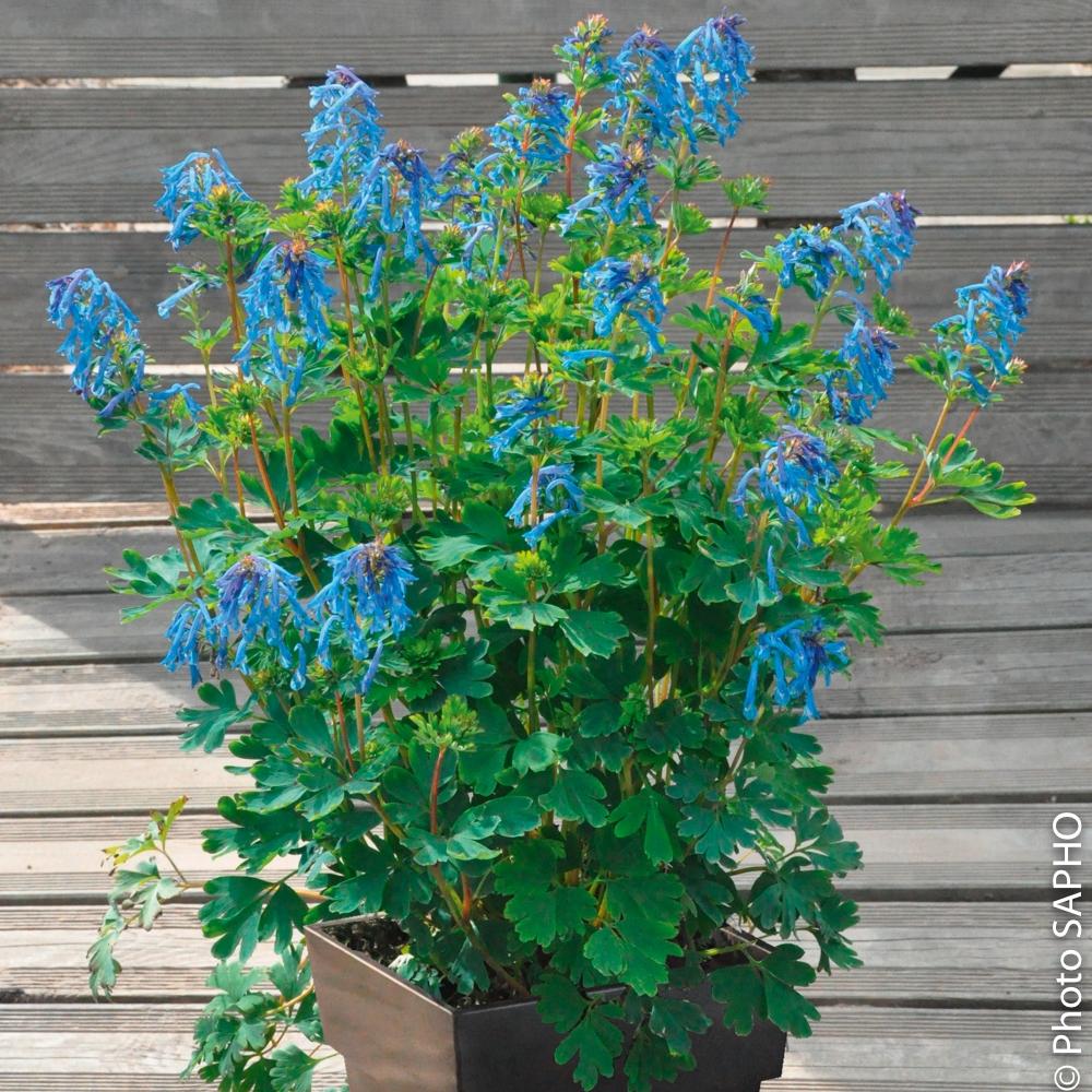 plante exterieur en pot - Agencement de jardin aux ...