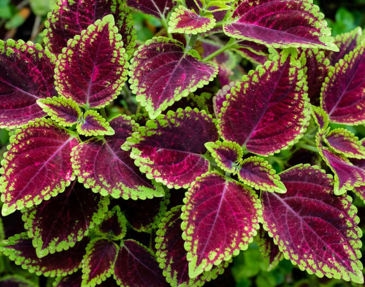 plante exterieur hiver ete - Agencement de jardin aux ...