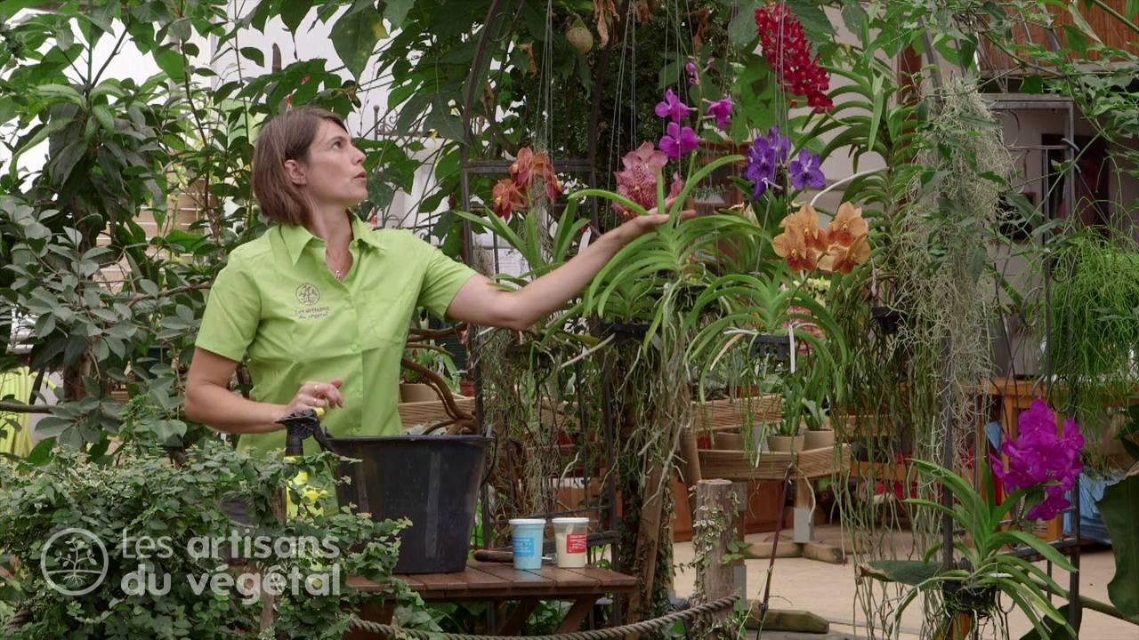 planter une orchidee - Agencement de jardin aux meilleurs prix